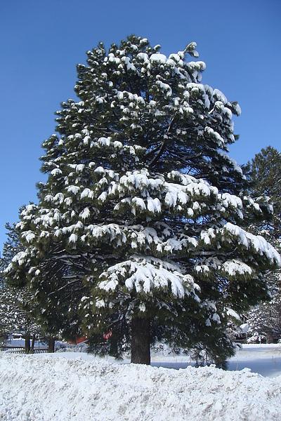 雪23.JPG