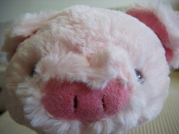 豬4.JPG