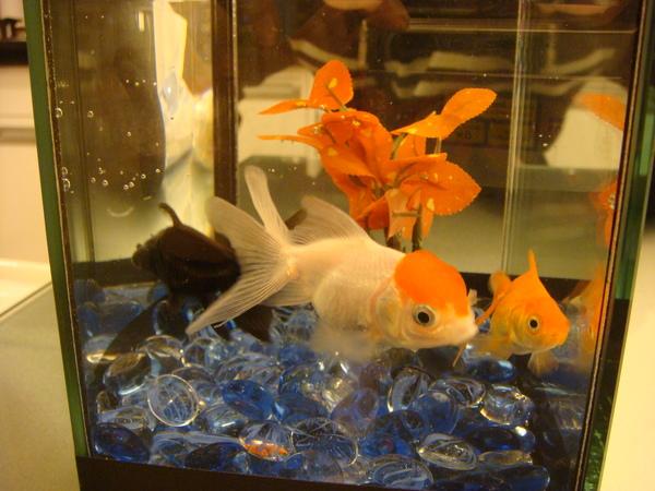 魚3.JPG