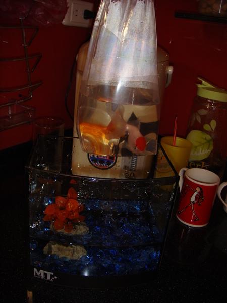 魚8.JPG