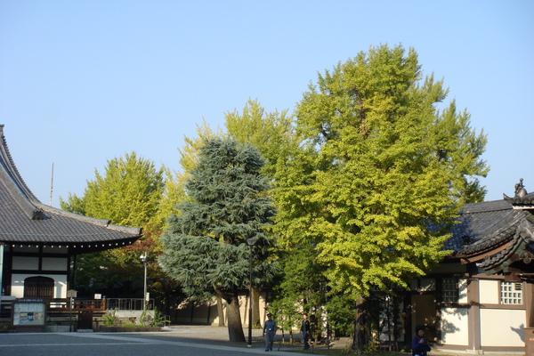 東本3.JPG