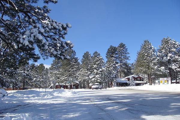雪24.JPG
