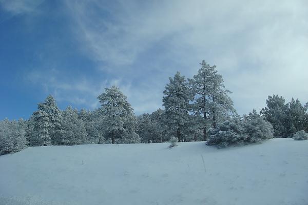 雪8.JPG