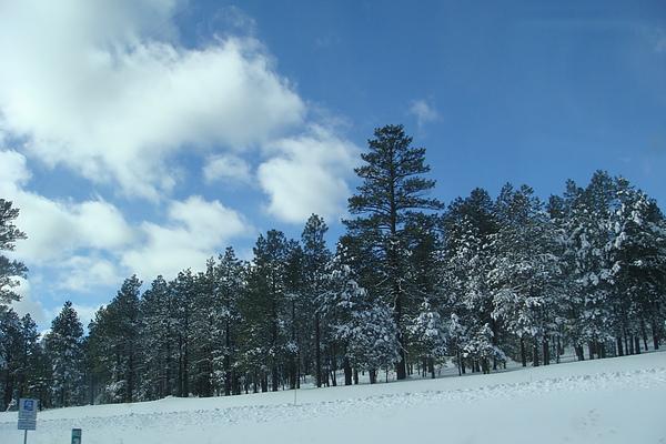 雪25.JPG
