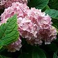 皇宮裡奇妙的花1