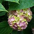 皇宮裡奇妙的花2