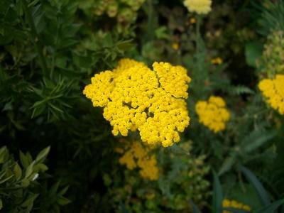 皇宮裡奇妙的花3