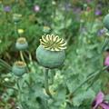 皇宮裡奇妙的花4