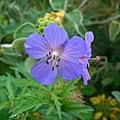 皇宮裡奇妙的花6