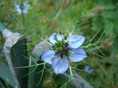 開花是這樣子