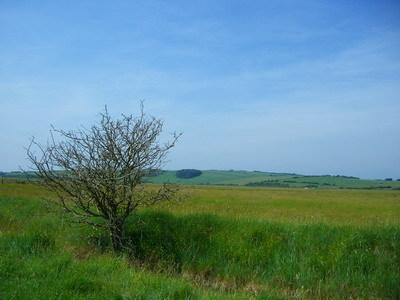 草上的枯樹