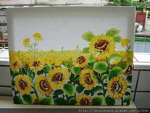 sunflower014