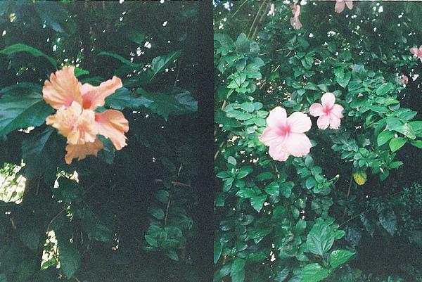 看看這捲的花兒