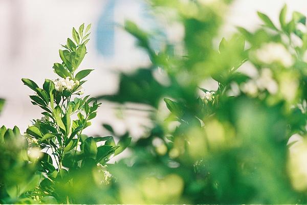 還是需要點綠色植物來消消暑