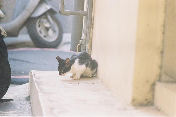 蕭百均家附近的小貓