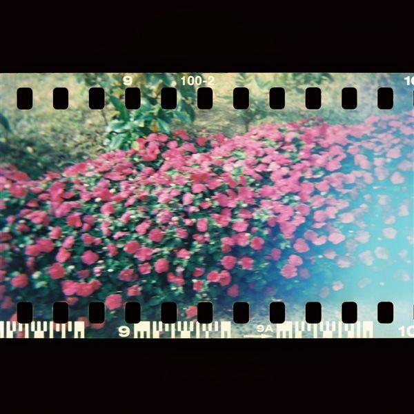 等紅綠燈旁邊的花