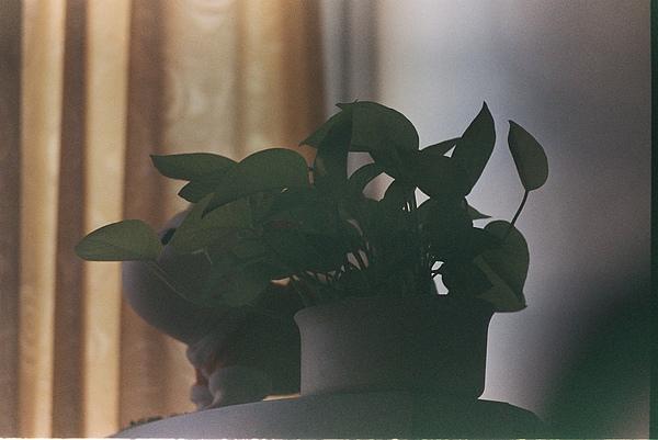 再回到房間拍一下盆栽  發現室內真的不太行