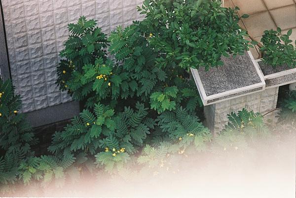 從四樓往樓下拍 就是這麼近的樹了