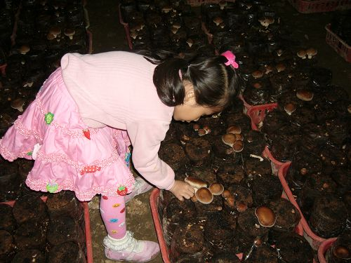 阿亮香菇園2