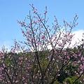 陽明山5.jpg