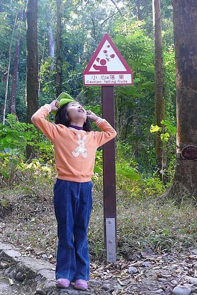 雙溪熱帶母樹林1.jpg