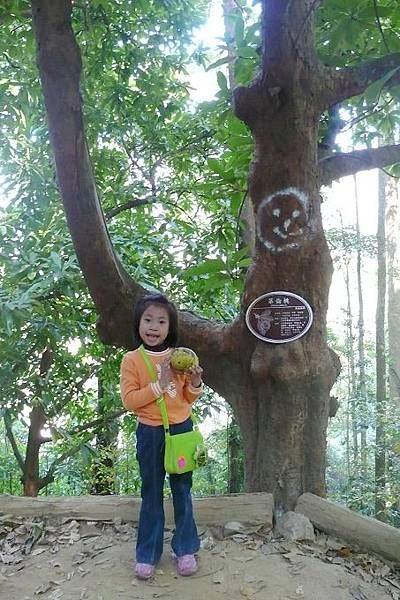 雙溪熱帶母樹林2.jpg