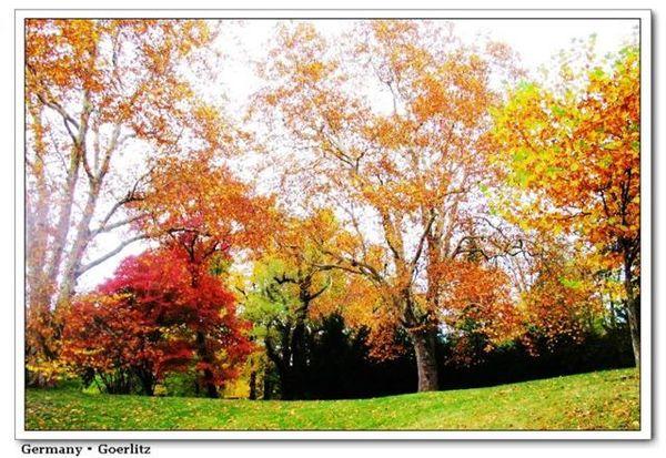GZ_autumn3.jpg