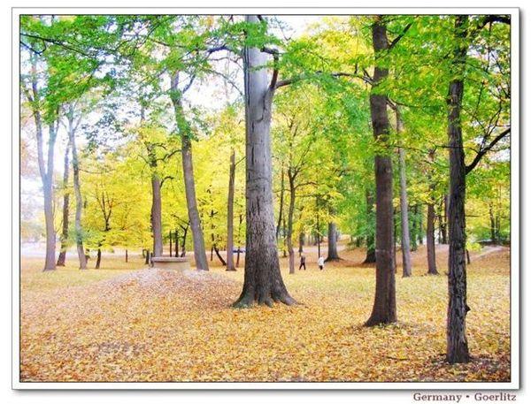 GZ_autumn4.jpg
