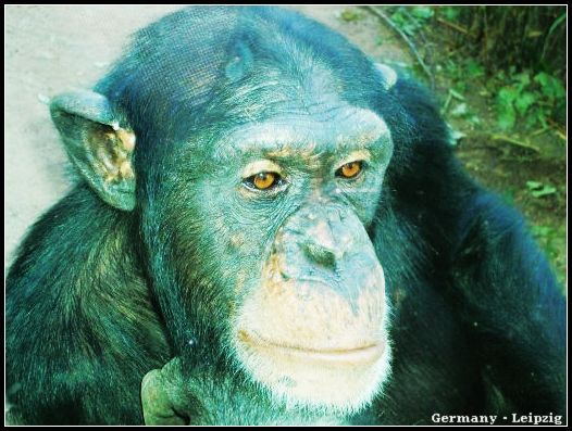 Zoo_chim1.jpg