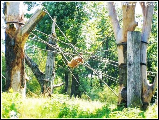 Zoo_utan.jpg