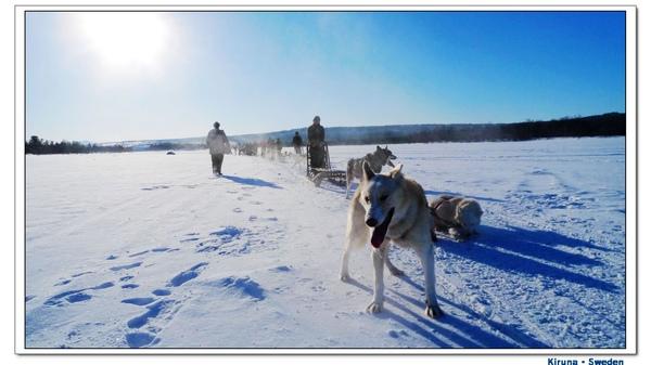 Kiruna_D1_sledge and dog.jpg