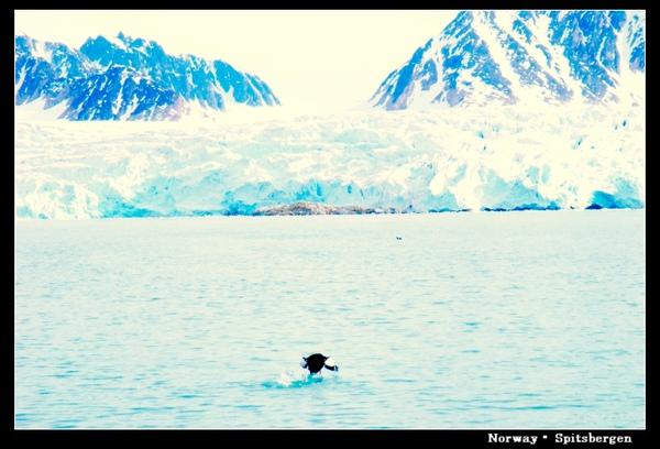 Spitsbergen_glacier.jpg