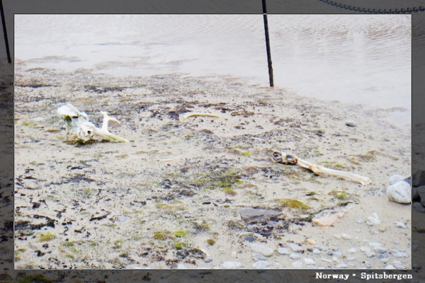 Spitsbergen_whaler.jpg
