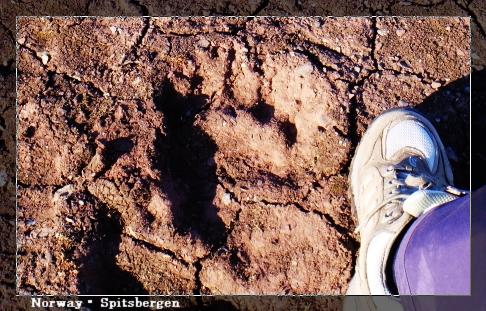 Spitsbergen_footprint.jpg