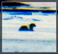 Spitsbergen_sbea2r.jpg