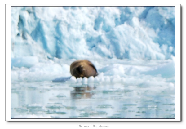 Spitsbergen_walrus2.jpg