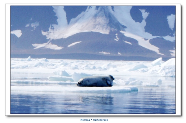 Spitsbergen_seal2jpg.jpg