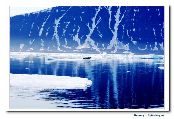 Spitsbergen_seal1.jpg