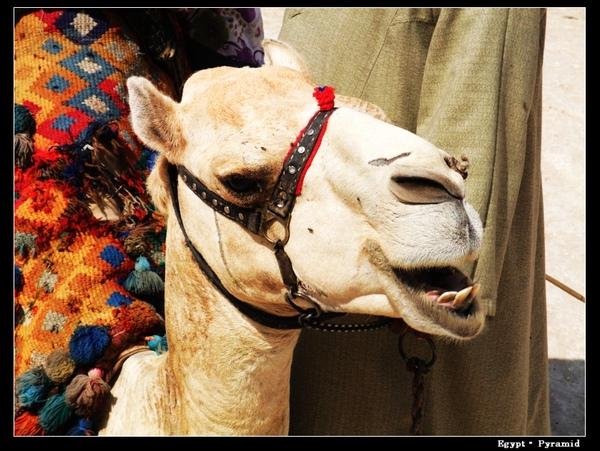 camelride1.jpg
