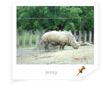 犀牛.jpg