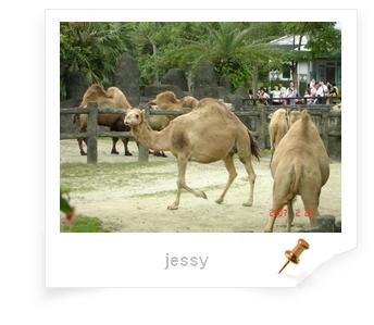 駱駝.jpg