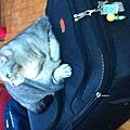 出發前貓兒子霸佔旅行箱3