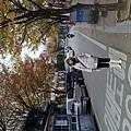 弘大楓葉街5