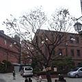 明洞天主教堂8