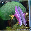 2009-4-29 下午 12-13-53.JPG