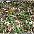 2009-4-29 下午 04-37-53.JPG
