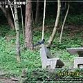 2009-4-29 下午 05-00-38.JPG