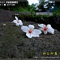 2009-5-3 上午 08-10-37.JPG