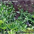 2009-7-25 上午 11-05-00.JPG