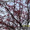 2010-2-23 下午 05-21-20.JPG